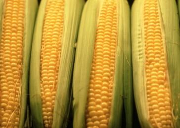 Cousin's Market carries the best corn in Ontario